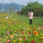백일홍으로 외동읍을 물들이다!