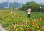 3. 백일홍으로 외동읍을 물들이다!